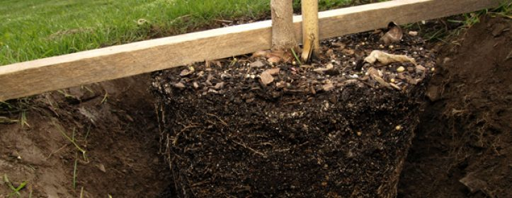 Proper Tree & Shrub Planting Depth