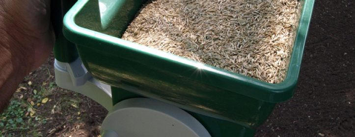 Lawn Seeding